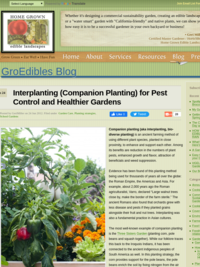 GroEdibles Blog: Interplanting (Companion Planting) for Pest Control and Healthier Gardens