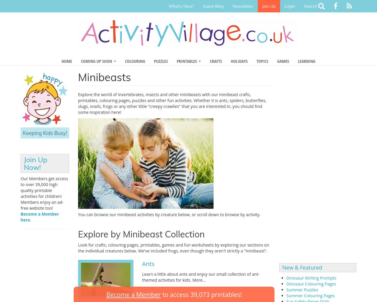 Minibeasts - creative