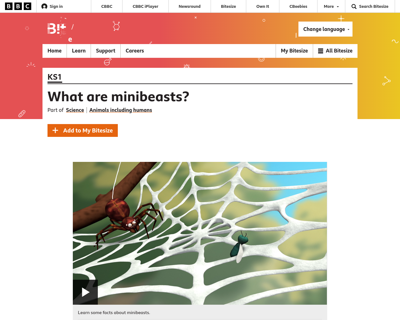 What are Minibeasts?